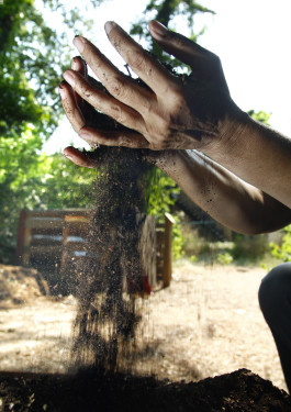 Stony Brook University is involved in research on groundwater contamination from composting. Findings in past reports show high levels of manganese and alpha radiation. (PHOTO CREDIT: MCT CAMPUS)