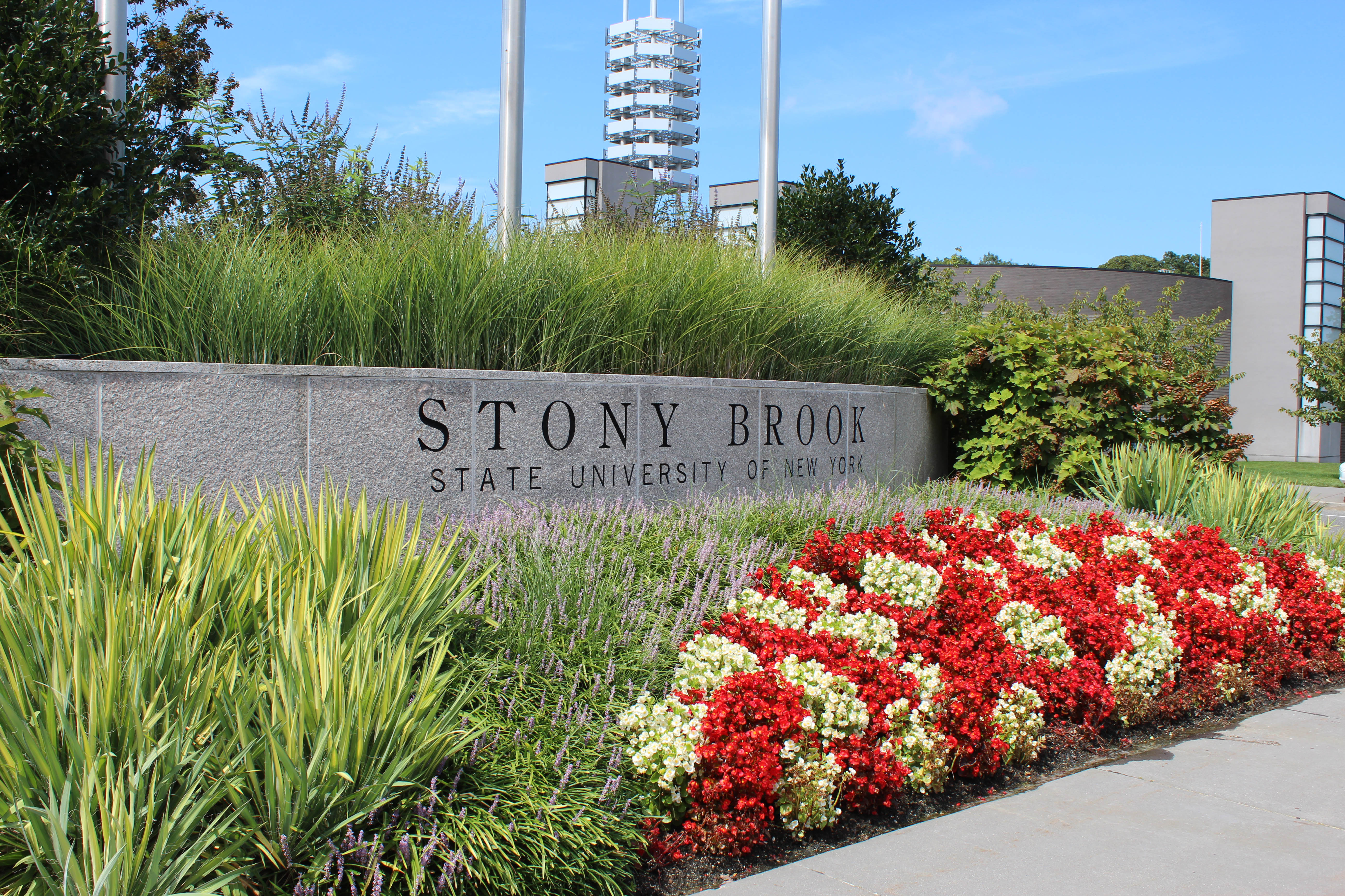 Stony brook ups