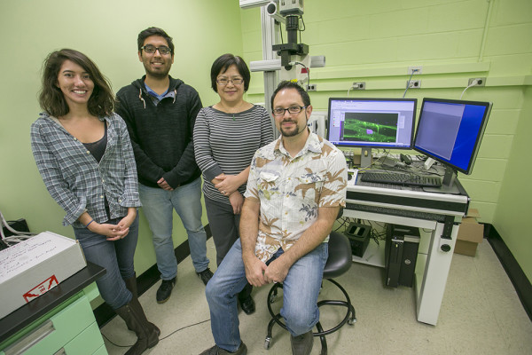 From left to right, Mana Chandhok, a Ph.D. student; Ivan Chavez, a master's student; Wan Zhang, a laboratory technician; and seated is David Q. Matus, Ph.D. in Matus' Stony Brook laboratory. In this lab, researchers study cells and cancer processes. <em>PHOTO CREDIT: STONY BROOK UNIVERSITY</em>