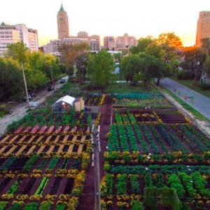 Tour: Urban Agriculture Tour