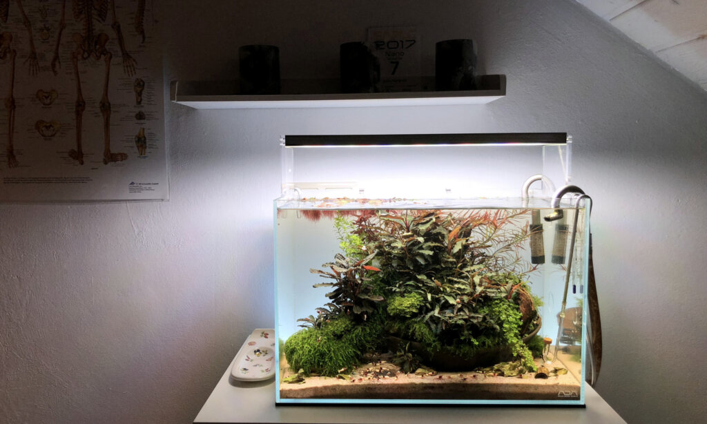 Biofilm In Planted Tanks — How to (Finally) Solve and Prevent Biofilm