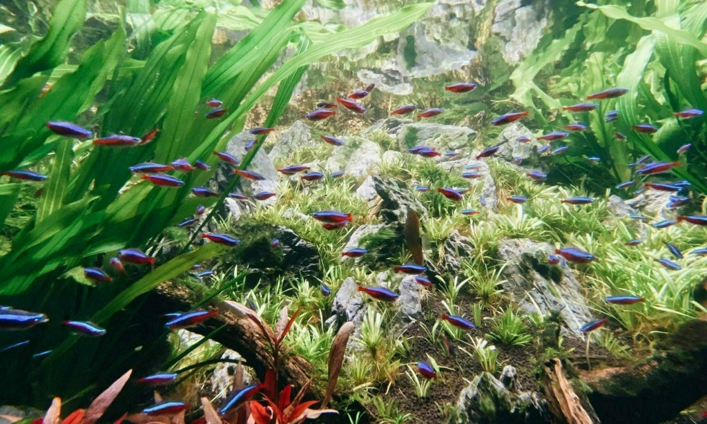 Healthy planted tank 2021 05 31 040840 — The 4 Principles to Create Thriving Planted Tanks