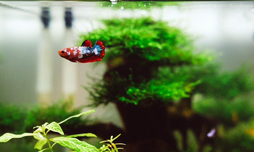 Huy phan n Jr SZM Oa Jg unsplash — Live Plants For Betta Splendens