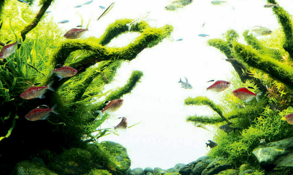 Java moss on hardscape — The Complete Care Guide to Java Moss