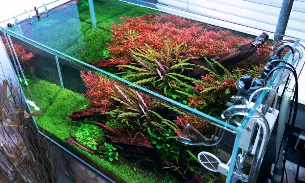 Optimizing CO2 Usage — Optimize your Aquarium's CO2 Usage