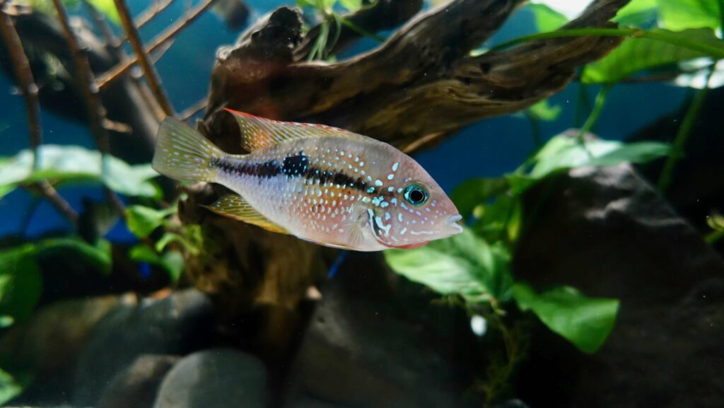 Cichlid in Hard Water Aquarium — The Definitive Guide to Water Parameters in Planted Tanks [Full Explanation]