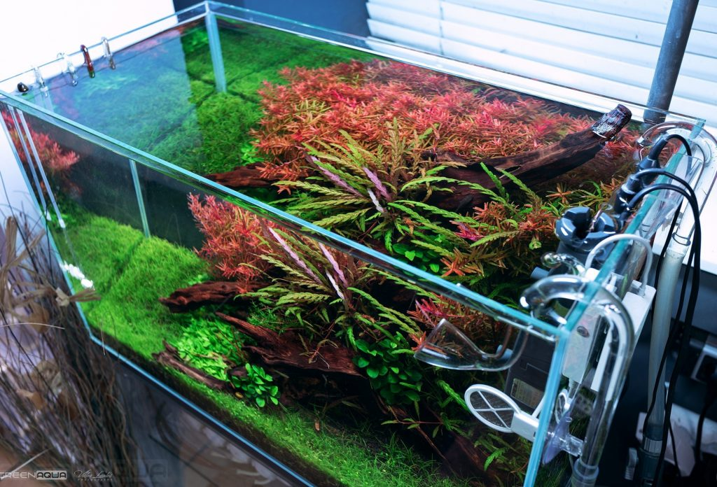 Optimizing CO2 Usage — Optimize your Aquarium's CO2 Usage