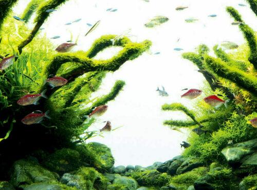 Java moss on hardscape