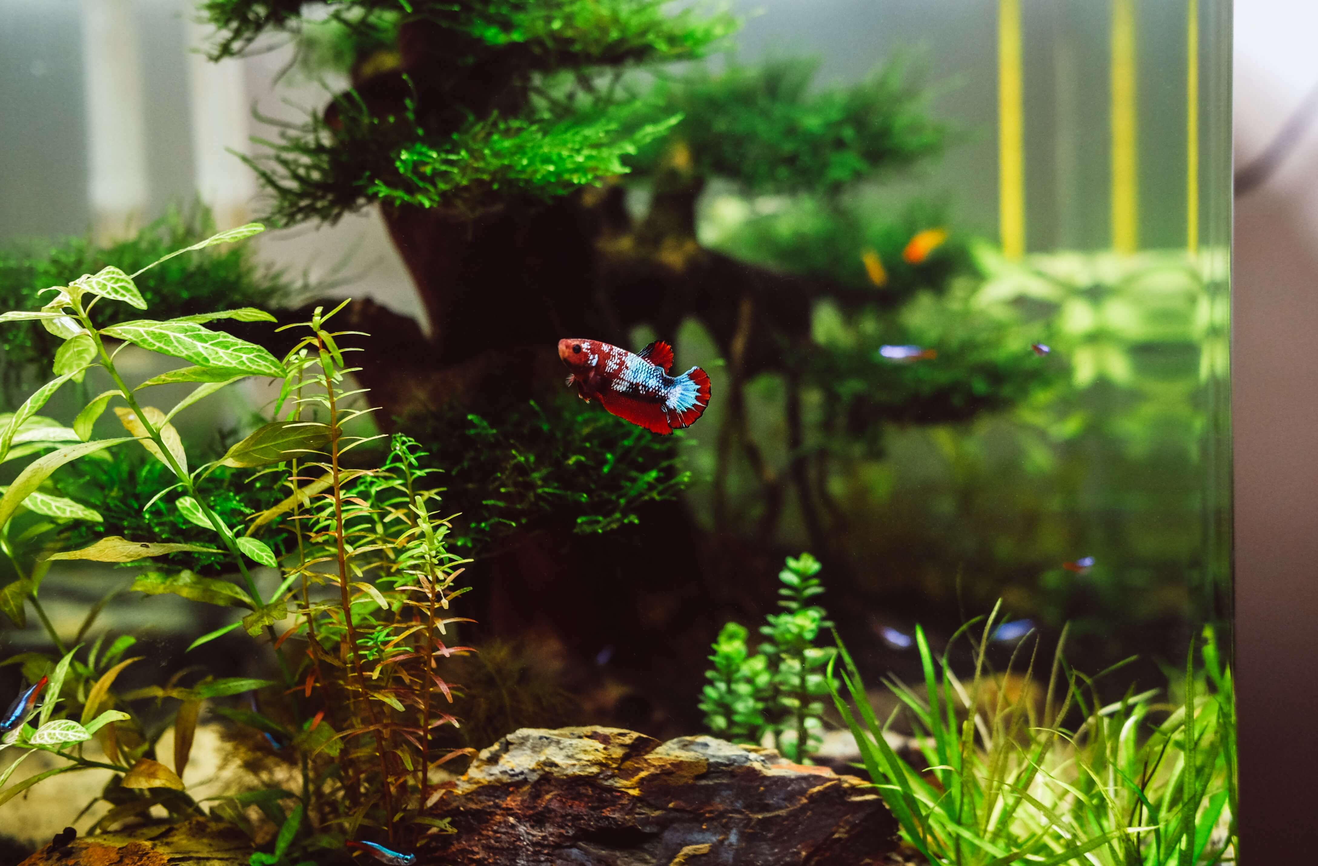The Definitive Guide to Water Parameters in Planted Tanks [Full Explanation]