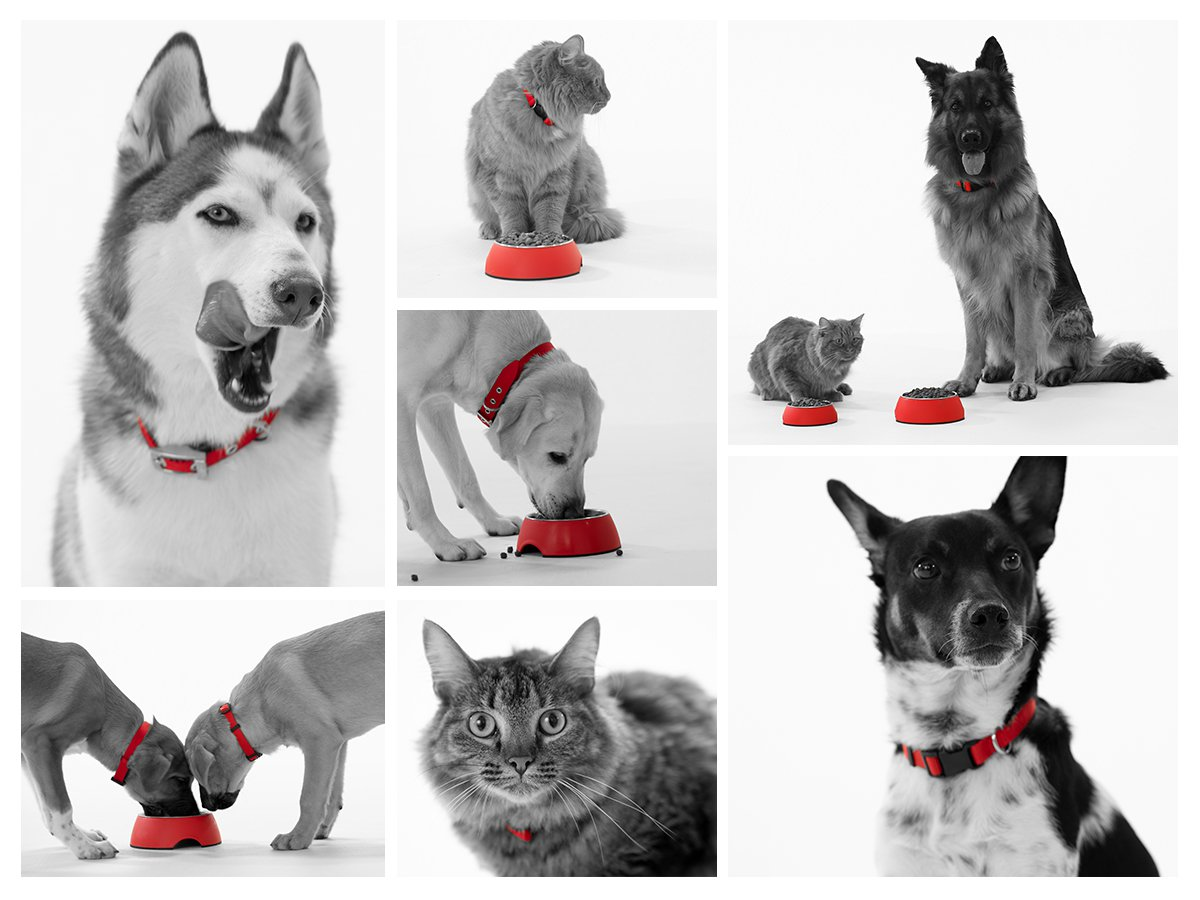 Red Collar - photo collage