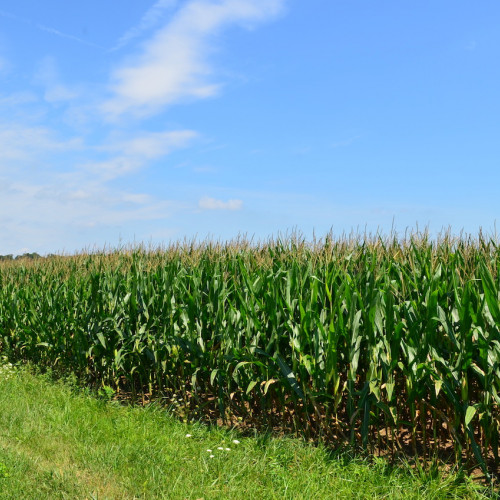 80+/- acre of prime agricultural farm ground northwest of Huntington, Indiana.