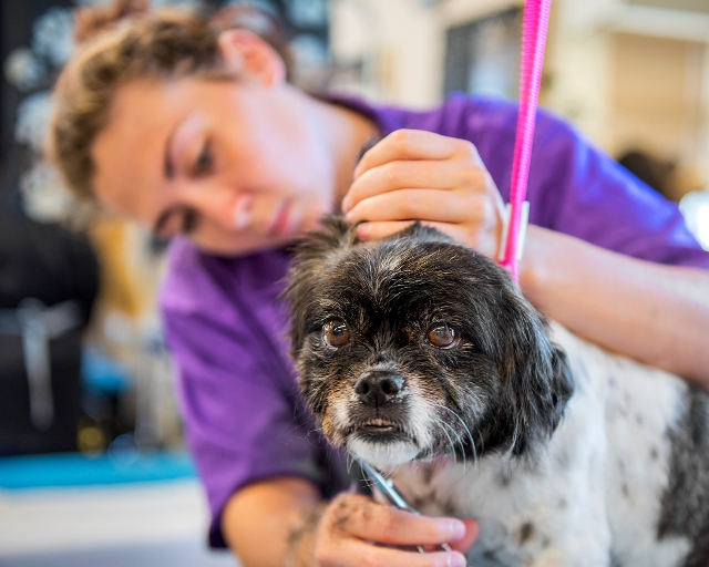 Animal Studies (graduates may work part-time or full-time in: Grooming salon; Veterinary practice; Pet store; Animal day care; Boarding facility