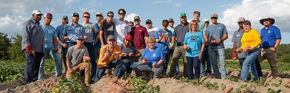 Agriculture students and college staff harvesting sweet potatoes.