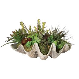 Uttermost Sea Coast Succulents