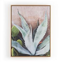 Agave Plant By Brooke Slezak