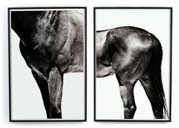 Horse By Yusuke Murata-Set Of 2
