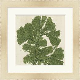 Brilliant Seaweed IV