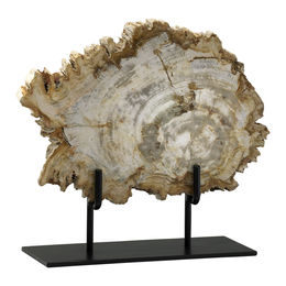 Petrified Wood On Stand, Medium