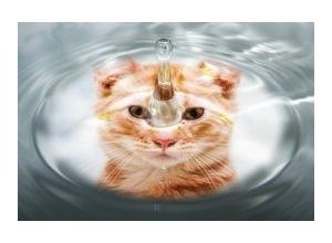 Montagem de foto Gota de Agua