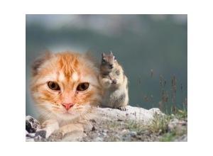 Moldura - Esquilo