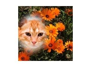 Flores-Laranjadas