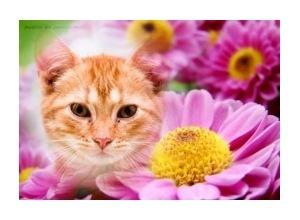 Flores-Caramelizadas