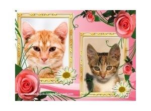 Moldura para duas Fotos - Duas Fotos Com Rosas