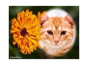 Flor-laranjada