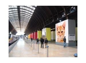 Montagem de Fotosfoto na estacao de trem