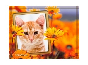 Flores-laranja-com-moldura