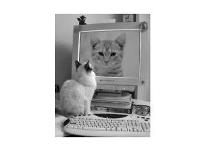 Montagem de foto monitor com gato