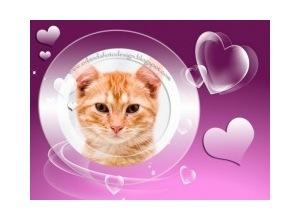 Moldura - Pink Love