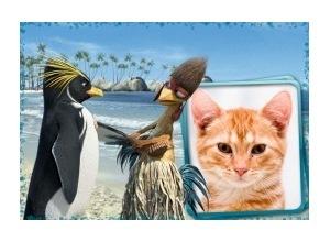 Moldura - Ta Dando Onda Pinguin E Galo