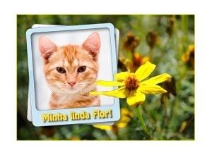 Minha-Linda-Flor