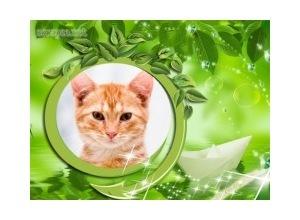 Folhas-Verdes-e-Barquinho