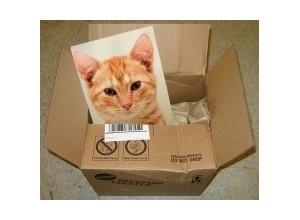 Montagem de foto foto na caixa