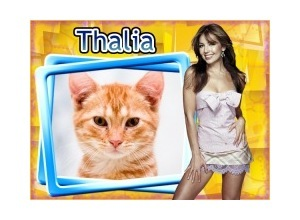 Moldura - Thalia