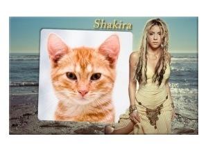 Moldura - Shakira