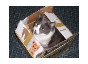 Montagem de foto Gato na Caixa