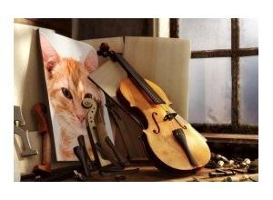 Montagem de foto Lindo Violino