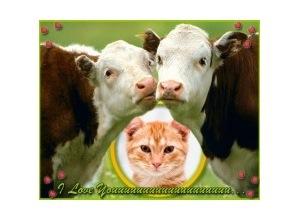 Moldura - Vacas Apaixonadas