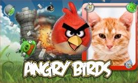 Moldura - Passaros Angry Birds