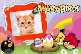 Angry-