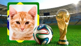 Moldura - Taca Copa 2014 Brasil