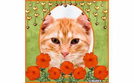 898-flores-laranja