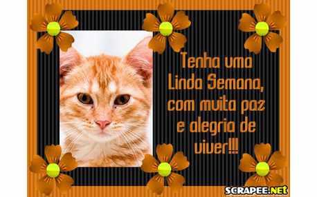 943-com-muita-paz