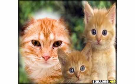 Moldura - Gatinhos