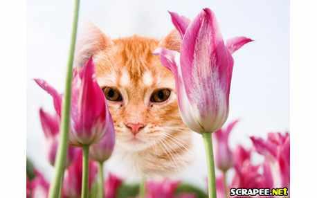 1089-canteiro-de-tulipas