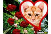 1091-entre-as--rosas