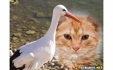 Moldura - Cisne